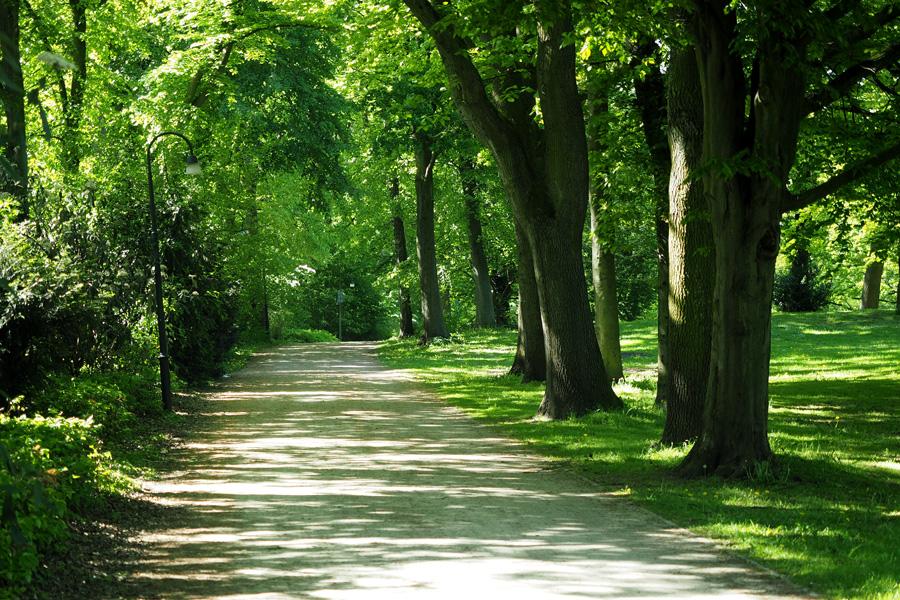 Alleen wechseln sich mit kleinen Pfaden ab, überall Wiesen und kleinere Flächen, hier und da mal eine Bank oder ein Denkmal: Das ist typisch für Landschaftsgärten nach englischem Vorbild.