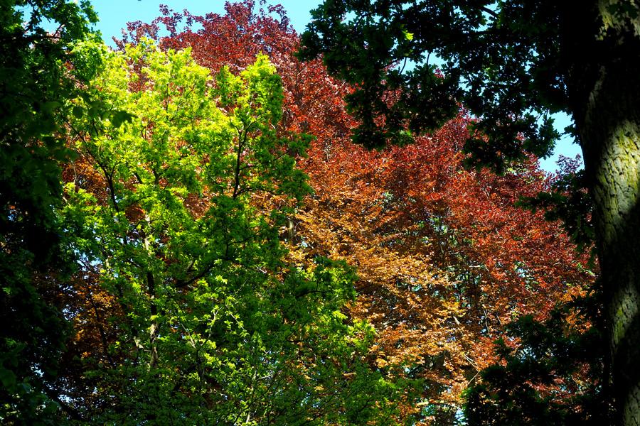 Unterschiedliche Bäume sorgen auch im Sommer für eine bunte Farbpalette.