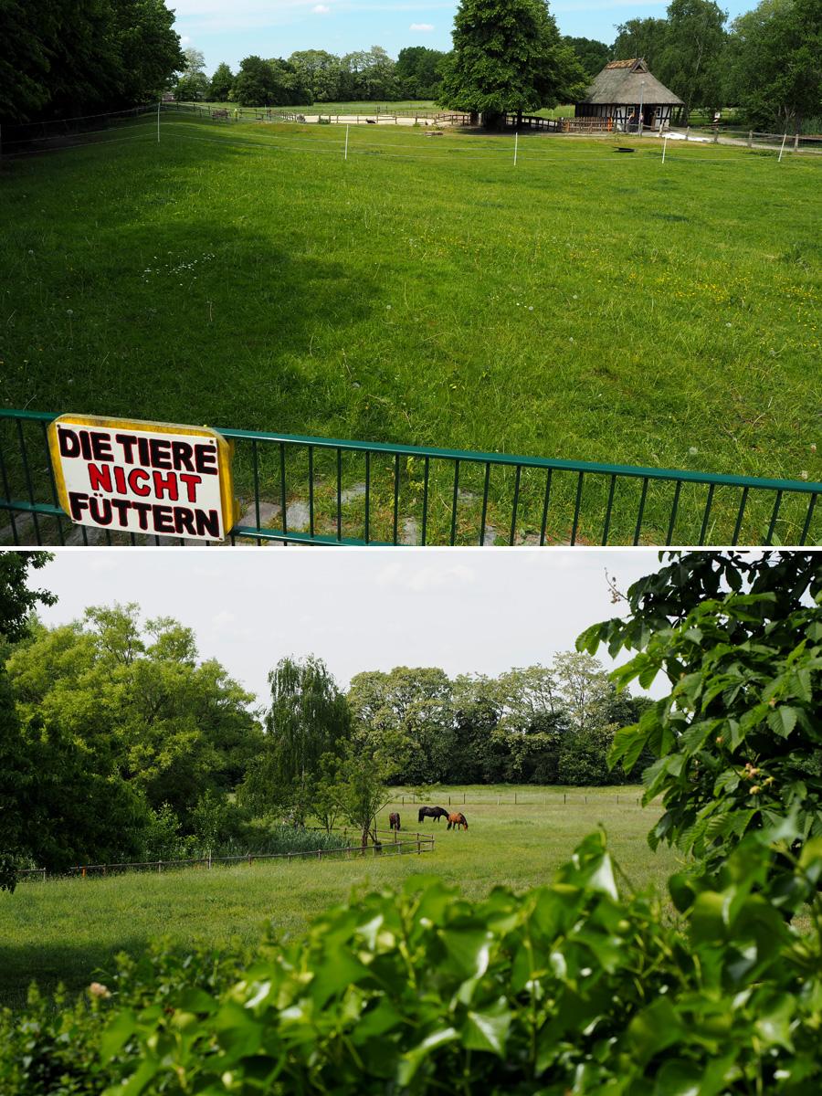 So würde ich auch gerne wohnen: Das Tier- und Landschaftsprojekt vom Sportgarten setzt sich für artgerechte Haltung ein.