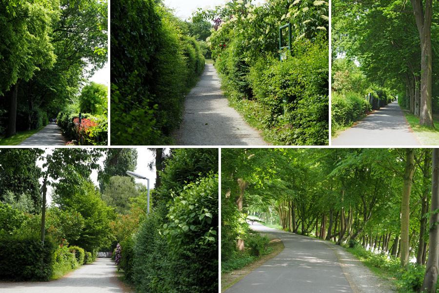So schön grün! Aber auch im Winter ein beliebtes Spaziergangsgebiet.