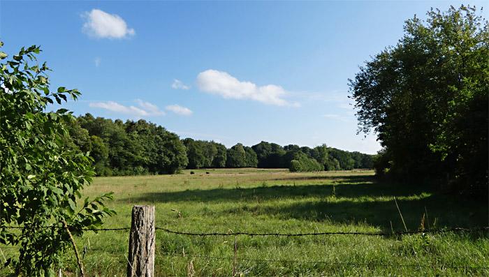 Kuhweiden ohne Kühe - ein heißer Sommer