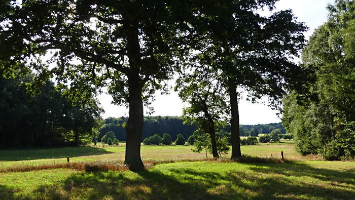 Hügel und Felder und Bäume