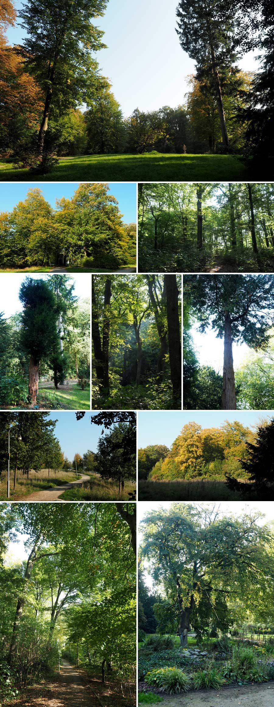 Parkflächen wechseln sich mit Waldabschnitten ab. Überall finden sich auch außergewöhnliche Bäume. Hier lässt sich wirklich abschalten.
