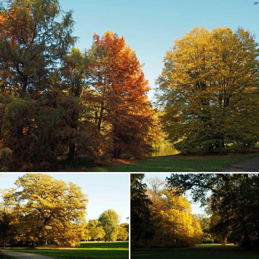 Gold, Gelb, Braun vor blauem Himmel. Die gesamte Farbpalette des Herbstes findet sich im Bürgerpark.