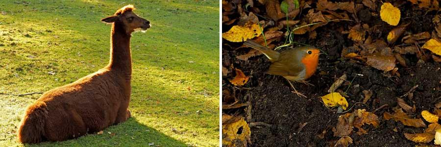 Ob groß oder klein: Auch die Tiere scheinen einen so schönen Tag zu genießen. Diese beiden fügen sich auch farblich perfekt in die Herbstlandschaft ein.