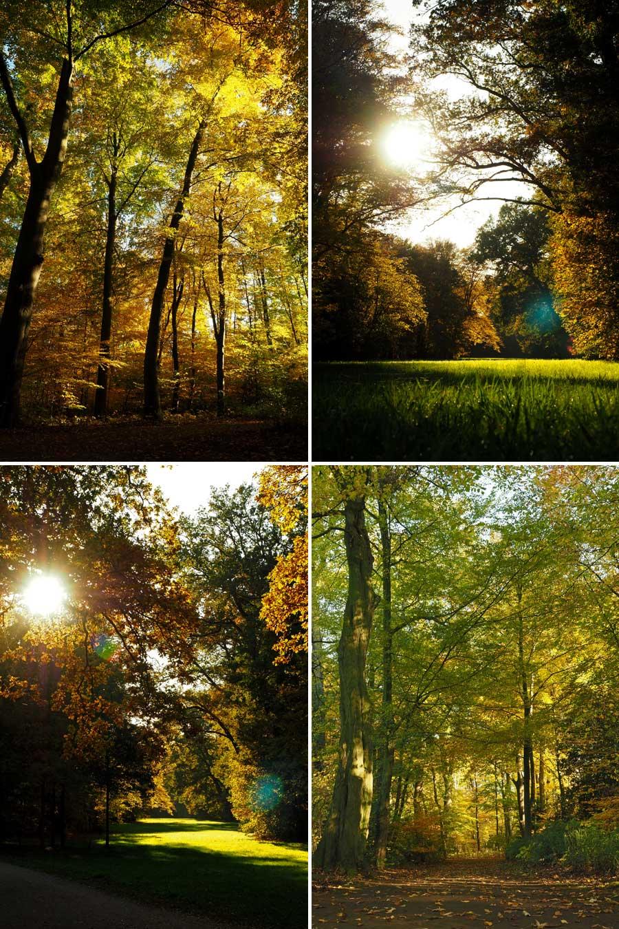 Glühende Baumwipfel: Die tiefstehende Sonne bringt die Baumkronen zum Leuchten.