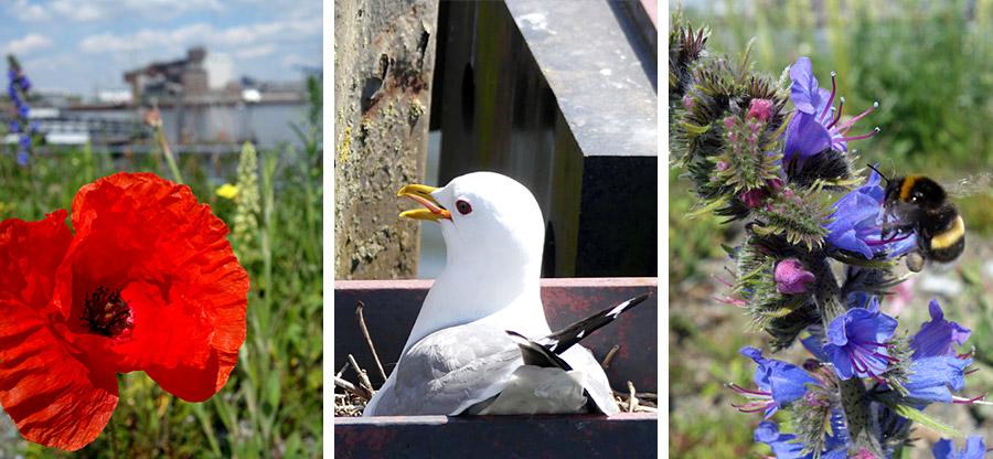 Flora und Fauna beim Schiffsanleger