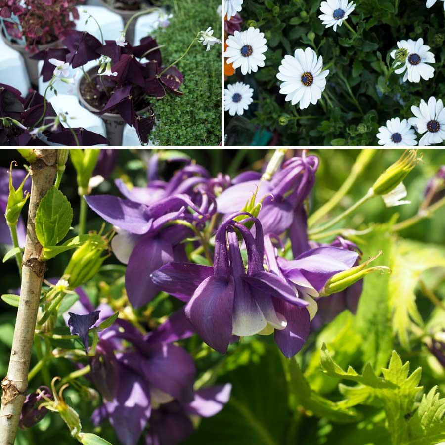 Von zart bis farbenprächtig - hier wird einem die riesige Vielfalt der Pflanzenwelt so richtig bewusst
