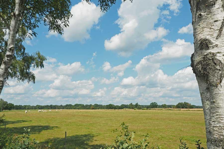 Kühe, Strohballen, leicht bewölkter Himmel - die Idylle eignet sich bestens für eine Landpartie.