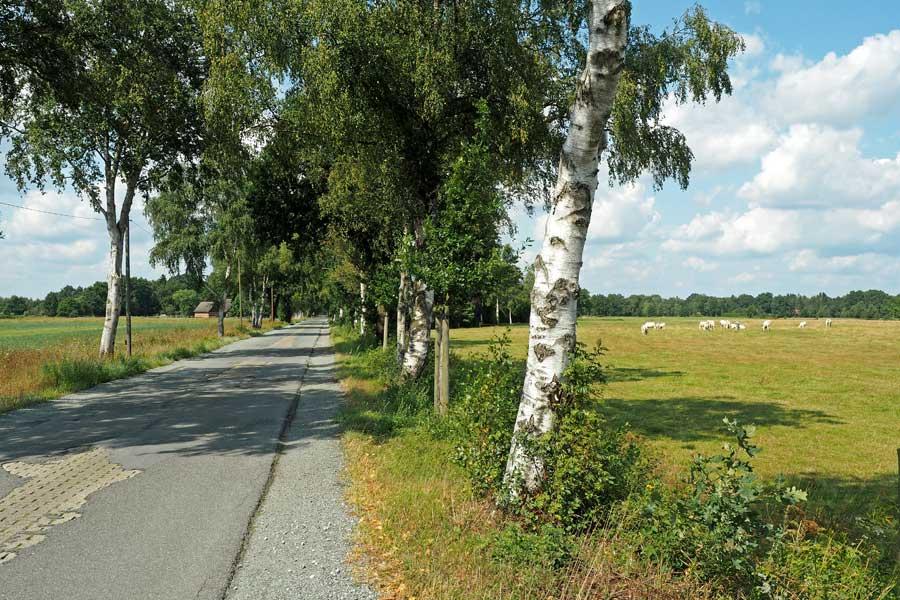 Über Landwege und Seitenstraßen führt der Landradweg nach Worpswede. Immer gesäumt von Birken und anderen Bäumen, die sich in der Moorlandschaft wohlfühlen.