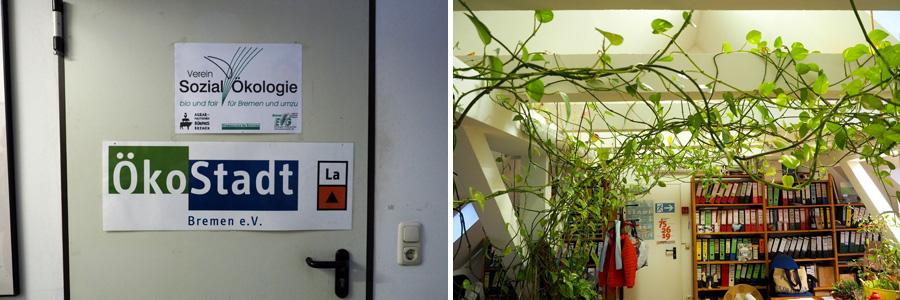 Ökologie wird im Büro der angesiedelten Vereine dank der riesigen Rankpflanze er- und gelebt werden.