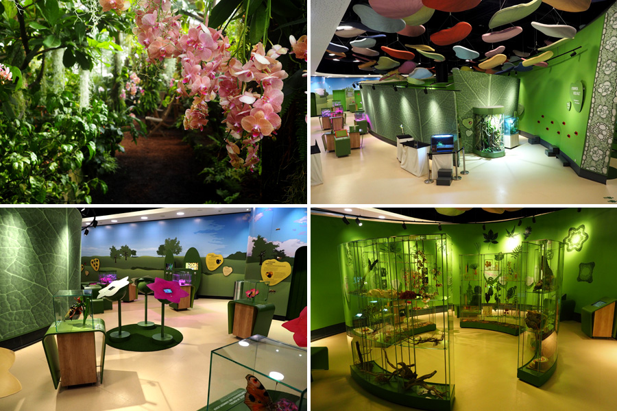 Es grünt so grün: Rund um die Wissenswelt der Botanik geht es in der Botanika.